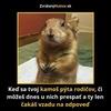 Volys
